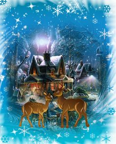de - Your free picture community - Glanzlichter - Noel