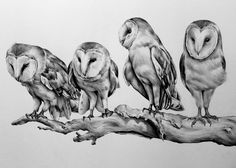 Barn Owls by Kate Powell Art