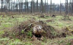 Farming & Agriculture: Ash dieback: the ruined Polish forest where deadly fungus began