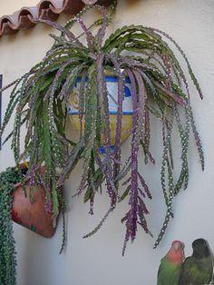 La casa de los cactus: Una pared con colgantes