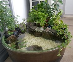 Aquaponics - My Backyard ideas Indoor Pond, Indoor Water Garden, Backyard Water Feature, Indoor Plants, Small Water Gardens, Fish Pond Gardens, Container Water Gardens, Patio Pond, Ponds Backyard