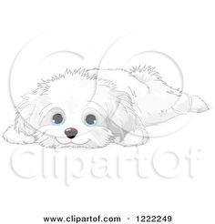 Clipart of a Cute Bichon Frise or Maltese Puppy Dog Resting - Royalty Free Vector Illustration by Pushkin