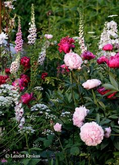 A garden is a planned space , enjoyment of plants and other forms of nature Peonies Garden, Pink Garden, Dream Garden, Beautiful Gardens, Beautiful Flowers, English Garden Design, Small Gardens, Garden Projects, Garden Inspiration