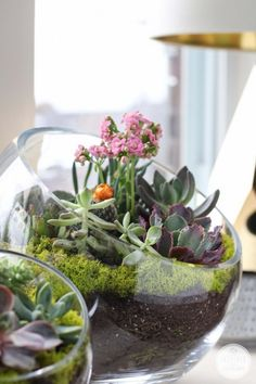 Terrariums and indoor gardens have always been there. Now some plants like succulents, which both have spread in recent years, allow us to have an attractive inner garden anywhere in the house. You can also find clear glass containers and very decorative shapes for very little money. We will assemble a succulent garden in a bowl in an easy and economical way.