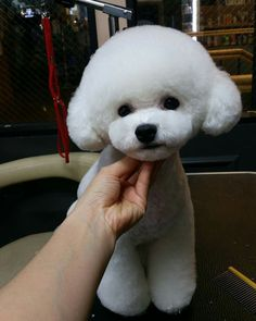 Before after grooming photo of a bichon frise doggie pinterest dog grooming styles poodle grooming pet grooming poodle haircut dog grooming business poodle cuts cute puppies cute dogs dogs and puppies dog solutioingenieria Gallery