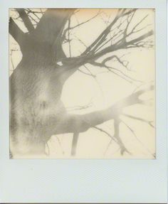 By Melissa Bear // www.melissa-bear.com // Polaroid SX-70 // The Impossible Project