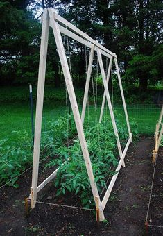 gorgeous 40 Casual Diy Trellis Design Ideas For Small Garden That Can Inspire You Tomato Vine, Tomato Trellis, Diy Trellis, Tomato Cages, Garden Trellis, Garden Beds, Trellis Design, Organic Gardening, Gardening Tips