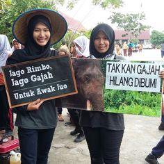 Save the Sumatran Elephants!