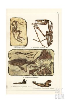 Fossils of Skeletons of Extinct Dinosaurs and Mammals Giclee Print at Art.com Dinosaur Posters, Fossils, Find Art, Framed Artwork, Mammals, Giclee Print, Extinct, Art Prints, Skeletons