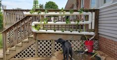 10 Awesome DIY Aquaponic Builds to Inspire You — desima