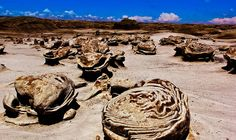 Bisti Egg Garden,New Mexico