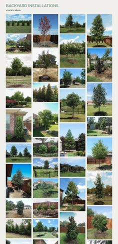 Best trees for backyards in North Texas / Top trees for backyards / Treeland Nursery Growing Tree, Growing Plants, Trees And Shrubs, Trees To Plant, Backyard Trees, Tree Care, Plant Nursery, Picture Design, Plant Care