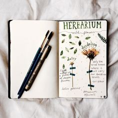 A DIY herbarium by Claire! Find her on Instagram as claire_water76