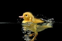 22 So Cute Photos of Baby Animals Playing With Bubbles | http://blog.piktureplanet.com/so-cute-photos-of-baby-animals-playing-with-bubbles/