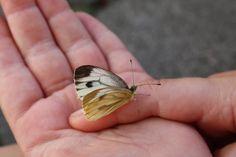 Frühlingskinder aufgepasst: Kindergeburtstag Schmetterlingsparty