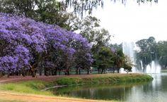 Primavera no Parque do Ibirapuera.