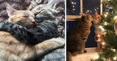 These Two Kittens Are So In Love, They Cannot Hold Their Feelings Anymore | Bored Panda