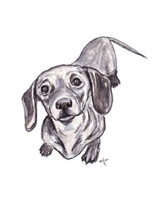 pen & ink doxie