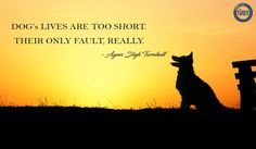 """""""Quote of the Day"""" #timeforpet #dogs #doglovers #puppy #petlovers #petlove #animallovers #petquotes #animallover #animals #animallove #quotes #animalquotes #quoteoftheday #petcare #pet #pets #bangalore #friday"""
