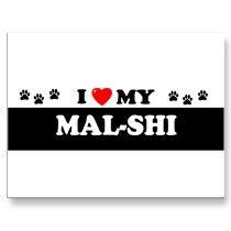 My Avett, my lil Malshi!