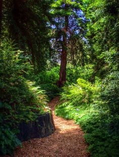 Photograph Redwood Park Path by T. Malachi Dunworth  on 500px