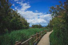 Toujours dans le parc naturel des Aiguamolls sur la Costa Brava  #Aiguamolls #Balade #Catalogne #Catalonia #CostaBrava #Espagne #España #Landscape #Marche #Paysage #Ride #Spain #catalunya #landscapes #paysages #promenade #walk #walking