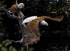 Oil Painting Canvas Print Picture Animals Eagles fly on canvas The Eagles, Where Eagles Dare, Bald Eagles, Eagle Wallpaper, Bird Wallpaper, Wallpaper Backgrounds, Wildlife Wallpaper, Wallpapers, Wall Art Pictures