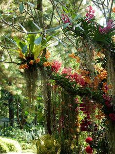 garden design - Como cuidar de orquídeas Clique e assista o vídeo Orquídea, orquidea, orquideas, orquidofilia, amoorquideas amorpororquideas orquidia orquidofilia orquidófilos orquideoterapia orquideabrasil orquideaslindas amoorquideasorquidario orquido Orchids Garden, Orchid Plants, Air Plants, Tropical Garden, Tropical Plants, Exotic Flowers, Beautiful Flowers, Orquideas Cymbidium, Orchid Care