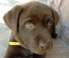 Here is a website on dog training -- http://dogtraining-xjf5zwps.cbbestonlinereviews.com