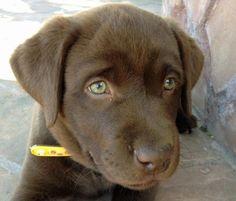 pets / Dog Training