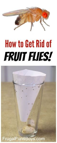 How to Get Rid of Fruit Flies - A simple and chemical-free trick that WORKS.  Save this one for summer!