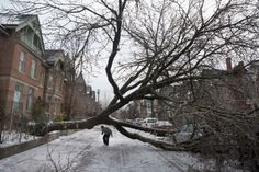 Is your Toronto home under attack by a large tree! The Christine Cowern Team is her to tell you the rules on cutting down trees in Toronto! Bad Ice, Ice Storm, Toronto Star, Snow And Ice, Pedestrian, Autumn Trees, Real Estate Marketing, Climate Change, Past