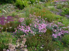 Magic Carpet Garden/ The Garden House in Devon