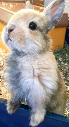 Cute bunny - Welcome to our website, We hope you are satisfied with the content we offer. Baby Animals Super Cute, Cute Baby Bunnies, Cute Little Animals, Cute Funny Animals, Bunny Bunny, Cute Bunny Pictures, Baby Animals Pictures, Fluffy Animals, Animals And Pets