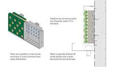 PRO WALL Design | GSky Living Green Walls