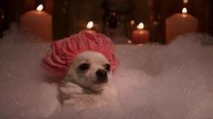Effective Potty Training Chihuahua Consistency Is Key Ideas. Brilliant Potty Training Chihuahua Consistency Is Key Ideas. Baby Animals, Funny Animals, Cute Animals, Dog Memes, Funny Memes, Reaction Pictures, Funny Pictures, Beverly Hills Chihuahua, Minding My Own Business