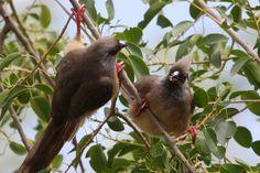 Birds facing off, Serengeti, Tanzania.