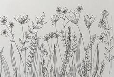 Simple Flower Drawing, Flower Art Drawing, Flower Line Drawings, Botanical Line Drawing, Botanical Drawings, Botanical Illustration, Art Drawings, Wildflower Drawing, Line Art Flowers