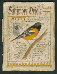 """Ken Scott American Frontier Artist Baltimore Oriole Ink, Watercolor & graphite on the inside of an antiqued book cover. Size:Approx. 8.5 x 11"""" Contact artist for pricing kenscottart@att.net"""