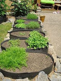Using old tires as raised beds