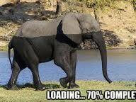 elephant loading