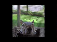1000 Images About Squirrel Repellents On Pinterest