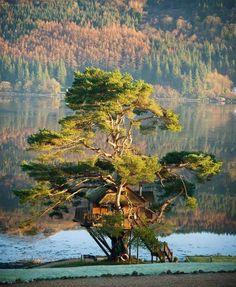 Scottish Tree House Lodge - Loch Goil