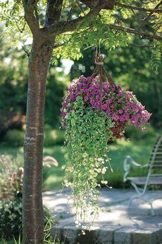 Die 34 Besten Bilder Von Hängende Blumentöpfe Crochet Plant Hanger