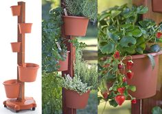 Vertical Garden Post...cool for limited space or just a different aspect to the garden.