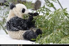 cute animals - Daily Squee: Snow Covered Noms