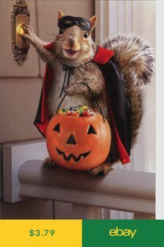 Squirrel Trick Or Treating Avanti Funny Halloween Card Funny Squirrel Pictures, Cute Animal Pictures, Pictures Of Squirrels, Funny Halloween Pictures, Cute Funny Animals, Cute Baby Animals, Animals And Pets, Fluffy Animals, Wild Animals