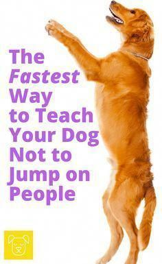 *************Training your dog is centered on building your relationship with your pet dog as well as implementing boundaries. Be firm but consistent and you'll notice awesome results in your dog training work. Training Apps, Training Your Puppy, Dog Training Tips, Training Classes, Potty Training, Training Videos, Agility Training, Crate Training, Training Equipment