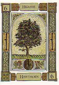 The Hawthorn card represents cleansing and chastity, bringing protection from the inner magical realms - in other words, a period of restraint, waiting or keeping oneself to oneself. Concentrate on mental rather than physical activity as a prelude to the spiritual fertilization, growth and harvesting what will follow, providing such preparation has been properly made as the pure white flowers of the Hawthorn turn to glowing red haws in the autumn.         Merlin and the Hawthorn Tree…