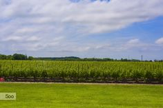 Vineyard Field by Pavel Voronenko on Vineyard, Wedding Venues, Nature, Outdoor, Instagram, Wedding Reception Venues, Outdoors, Wedding Places, Naturaleza